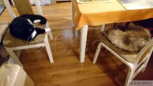 Kui tooli peal, siis ikka koos