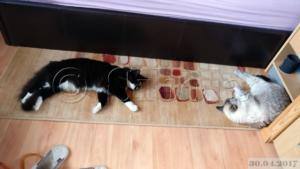 Kaks volaskit magavad