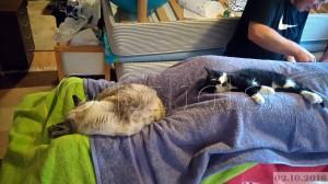 Ja nii nad siin magavad
