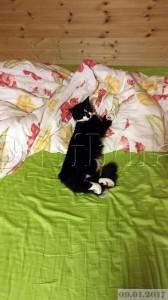 Voodis tuleb ikka padja peal magada
